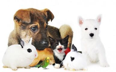 犬、猫…気になるペットで恋占い!あなたの「恋愛こじらせ度」が判明