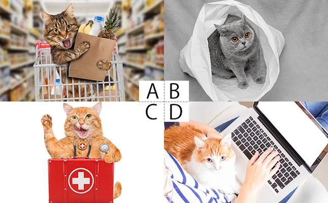 Aスーパー、Bコンビニ、Cドラッグストア、Dネット通販